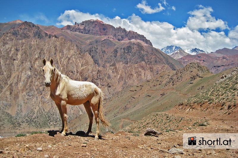 Ein Pferd in den argentinischen Anden